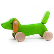 Bajo Green Dachshund Puppy