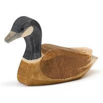 Ostheimer Canada Goose Swimming